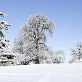 Winter Tree Line by Tim Gainey