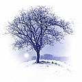 Winter Tree On Hill  by Movie Poster Prints
