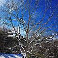 Winter Tree On Sky by MTBobbins Photography
