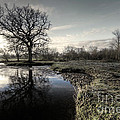 Winter Tree On The River Culm by Rob Hawkins