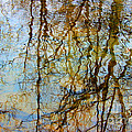 Winter Tree Reflections by Karen Adams