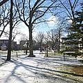 Winter Tree Shadows by Ellen Paull