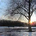 Winter Tree Sunset by Anita Burgermeister