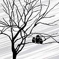 Winter Tree White by Natasha Marco