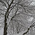 Winter Tree by William Norton