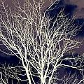 Winter Trees  2   by William   Adair