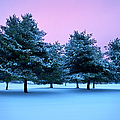 Winter Trees by Brian Jannsen