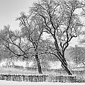 Winter Trees by Brothers Beerens