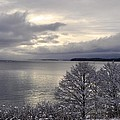Winter Trees by Cathy Mahnke
