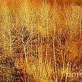 Winter Trees Color 4 by Roena King