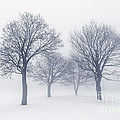 Winter trees in fog by Elena Elisseeva