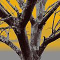 Winter Trees In Yellow Gray Mist 2 by Olivia Novak