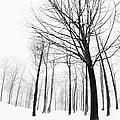 Winter Trees by Jan Tyler