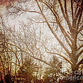 Winter Trees by Judy Wolinsky