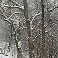 Winter Trees by Karen Adams
