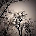 Winter Trees by LeLa Becker