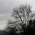 Winter Trees Number Four by Paula Tohline Calhoun