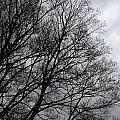 Winter Trees Number Three by Paula Tohline Calhoun