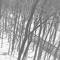 Winter Urban Wood by Valentino Visentini