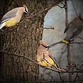 Winter Visitors by Jai Johnson