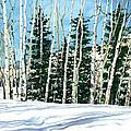 Winter Walk by Barbara Jewell