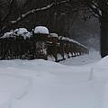 Winter Walk by Linda Shafer