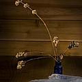 Winter Weeds In Blue Bottle by Leah McDaniel
