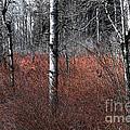 Winter Wetland I by Jani Freimann
