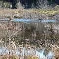 Winter Wetlands Of Alabama by Maria Urso