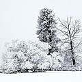 Winter White by Mike  Dawson