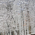 Winter White Trees by Aimee L Maher ALM GALLERY