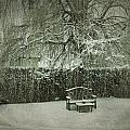 Winter Willow And Snow Covered Seat by John Colley