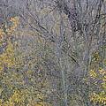 Winter Willows II by Charles Majewski