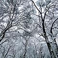 Winter Wonder by Jeff Klingler