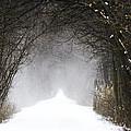 Winter Wonder Snow Tunnel Of Trees by LeeAnn McLaneGoetz McLaneGoetzStudioLLCcom