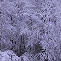 Winter Wonderland 1 by Mike McGlothlen
