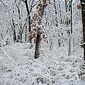 Winter Wonderland 2 by Robyn Pervin