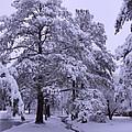 Winter Wonderland 3 by Mike McGlothlen