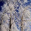 Winter Wonderland 7 by Terry Elniski