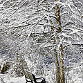 Winter Wonderland 9 by Allen Beatty