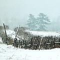 Winter Wonderland - Amazing Winter Landscape With Snow Falling by James Scott Preston