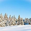Winter Wonderland by Cheryl Baxter