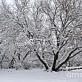 Winter Wonderland by Debbie Prediger