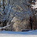 Winter Wonderland by Dianne Cowen