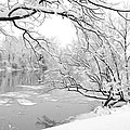 Winter Wonderland In Black And White by Tracy Winter