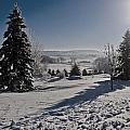 Winter Wonderland by Jayne Gohr