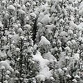 Winter Wonderland by Jeelan Clark