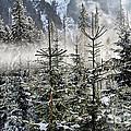 Winter Wonderland  by Mariola Bitner