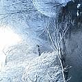 Winter Wonderland by Michele Scott