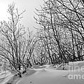 Winter Wonderland Monochrome by Terry Elniski